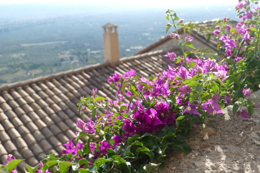 Pretty flowers at Mystras