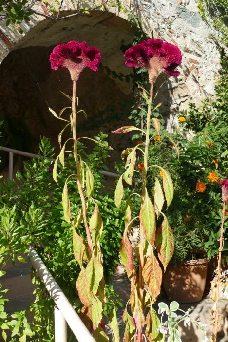 Weird flowers at Mystras