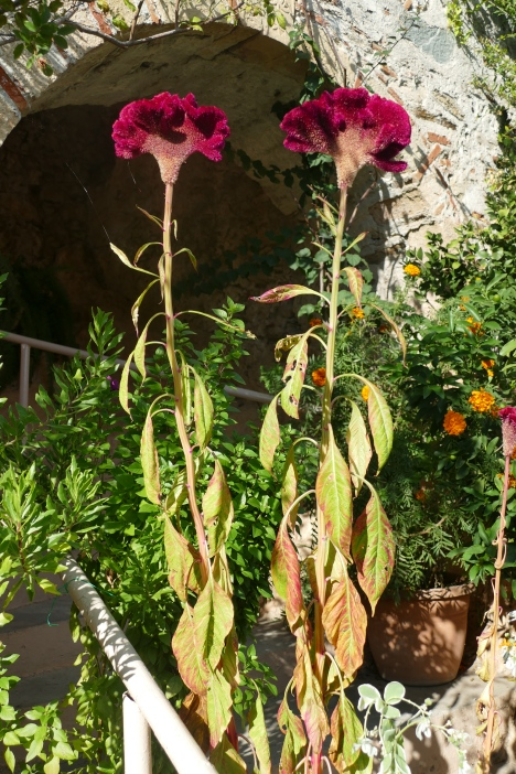 Weird flowers at Mystras