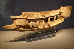 Clay model of a Roman quinquereme (Neopoli Voinon Museum)